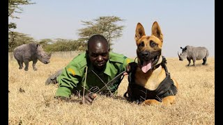 DIEGO THE MALINOIS - LETHAL ANTI POACHING DOGS