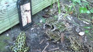 Troll ếch bằng smartphone