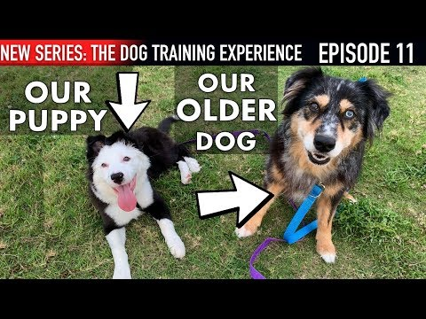How I'm Introducing Our Puppy To Our Older Dog