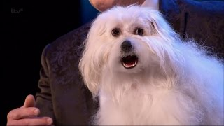Britain's Got Talent 2015 S09E01 Marc Métral with his Hilarious Talking/Singing Dog Wendy Full Video