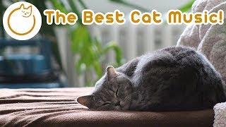 8 Hours of Specialised Music for Cats - Relax My Cat!