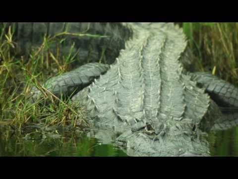 Beware of Alligators and Ugly Stuff Trailer #2