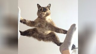 It's TIME for SUPER LAUGH! - Best FUNNY CAT videos - YouTube