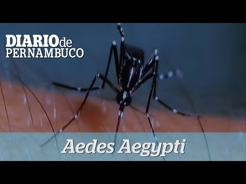 Plano de enfrentamento ao Aedes Aegypti