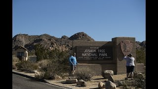 People are cutting down Joshua trees in Joshua Tree National Park