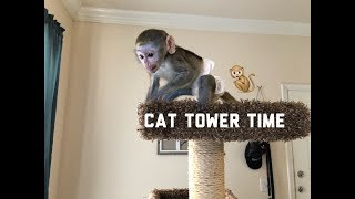 Baby monkey play time | Max plays on cat tower alone