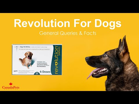 Revolution For Dogs - General Queries & Facts - CanadaPetsSupplies