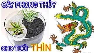 Cây Phong Thủy Cho Tuổi Thìn Năm 2019 | Phong Thủy Dương Cơ