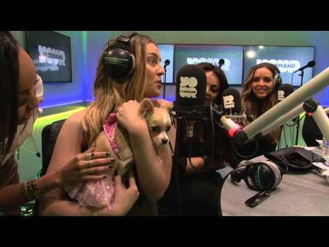 Little Mix Requests.... a puppy.