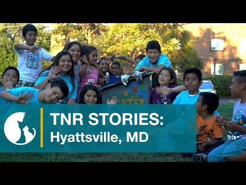 Alley Cat Allies TNR Stories: Maryland