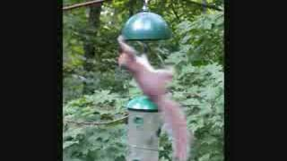 Mr Squirrel's Wild Ride