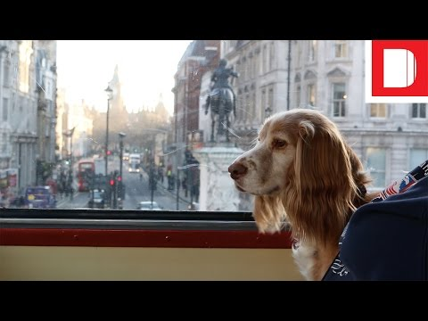 Experiential Barketing | A Tour Of London On MoreThan's Doggyssentials Bus