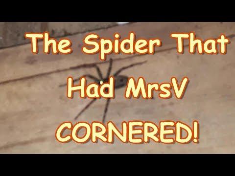 MrsV is Cornered By A SPIDER!