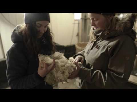 Fjällräven - Meet the sheeps!