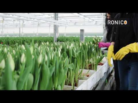 Ronico - Werken bij de broeierij bedrijven photo