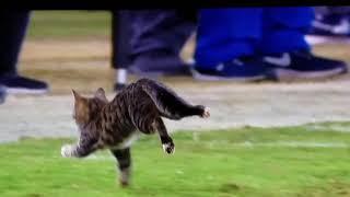 Thursday night football Cat on field Miami Dolphins vs Baltimore Ravens