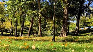 Serenity. Relax Music for Meditation, Sleep, Healing Therapy, Yoga - YouTube