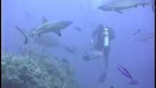 サメに餌付け2