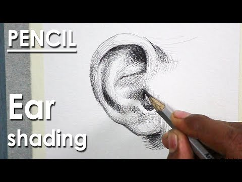 How to Draw A Realistic Ear in Pencil step by step