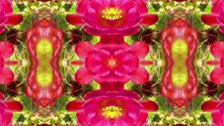 Cactus Flower Spring Dance *Pretty Piano Music* Story Below*