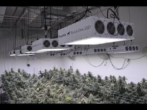 Best Commercial LED Grow Lights -- 10,000Watt -- Time-Lapse