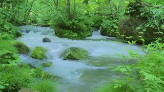 Relaxing Background Music for Meditation. Calming Music for Stress Relief, Yoga, Spa, Massage
