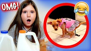 MY PUPPY PICKS MY SLIME INGREDIENTS! ~ Funny & Cute!