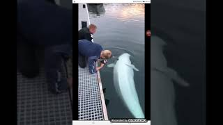 Guy drops his phone but this whale takes care of business:)