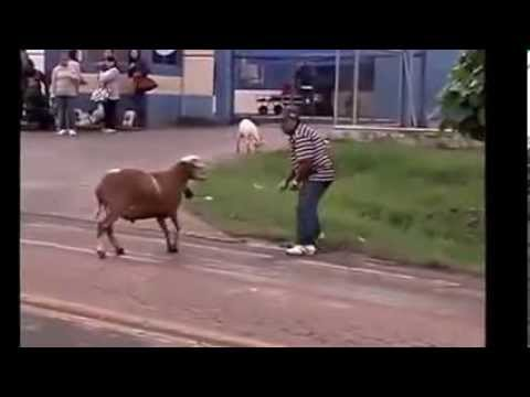 Napad životinje