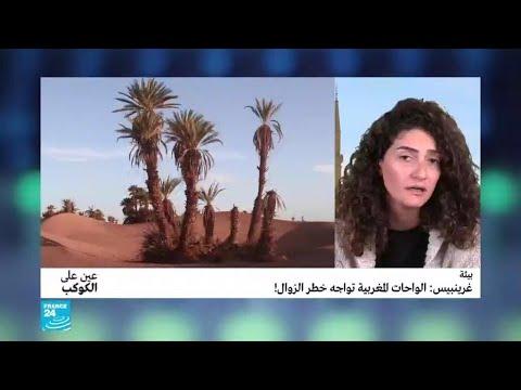 الواحات المغربية تواجه خطر الزوال