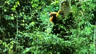 Zvierací rekordmani - Matky