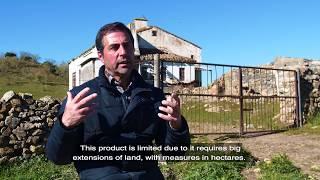 The Life of the Iberian Acorn-Fed Ham (La vida del Jamón Ibérico de Bellota)