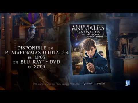 Animales Fantásticos y Dónde Encontrarlos - Lanzamiento Plataformas Digitales, BD y DVD