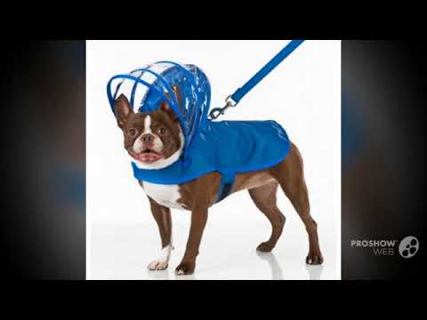 Rain Jacket for Small Dogs || Bloomingtails Dog Boutique