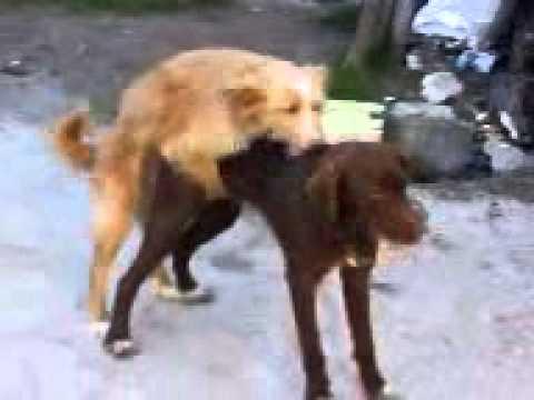 Amores perros escena xxx 1 - 2 1