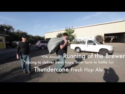 Thundercone Fresh Hop Ale | Running of the Brewers 7