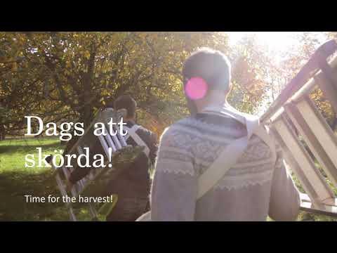 Svensk Hantverkscider