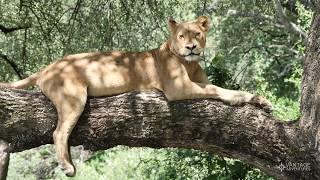 Lake Manyara, Tanzania: Meet the Locals and the Lions