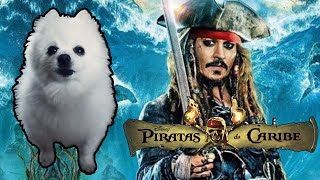 PIRATAS DO CARIBE em CACHORRÊS