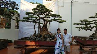 SH.543.Quá Sốc khi đứng trước cây Sanh cổ Nỏ thần, Lực sĩ,Ông Bụt.Những cây Sanh cổ đẹp nhất Việtnam