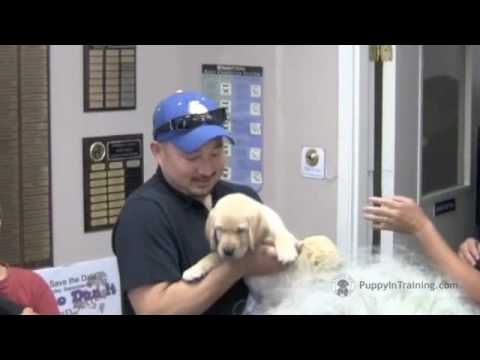 Puppy In Training TV - Ep1 - Picking Up Your Puppy
