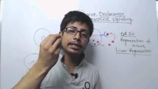Endocrine paracrine and autocrine signaling
