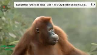 Funny ape song