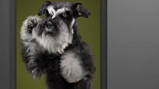 SHOW PREMIUM PET GROOMING PRODUCTS