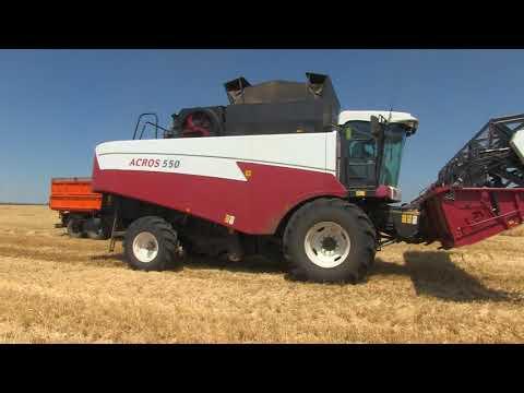 Уборка урожая зерновых в ООО «Светлое»