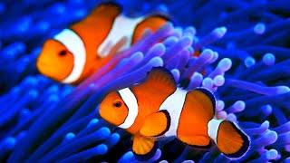 Stunning Aquarium & The Best Relax Music - 2 Hours - Sleep Music - HD 1080P
