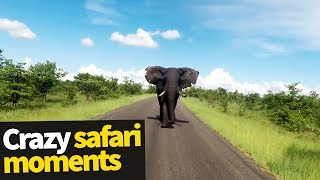 Top 20 Incredible Safari Moments Caught on Camera