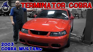 Terminator Cobra Mustang slithers into the CAR WIZARD's shop