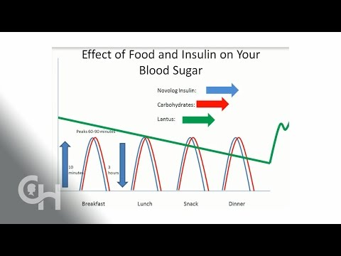 Basal/Bolus insulin and Carbohydrates