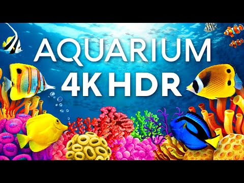 The Best Aquarium in 4K HDR ? Calm & Relaxing Coral Reef Aquarium - Sleep Meditation 4K Screensaver